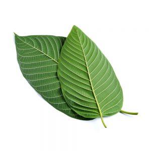 buy green malay online