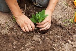 use kratom plant